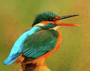 Kingfisher Mixed Media - Feathered Friends by Zeana Romanovna