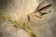 Hummingbirds Posters - Feathers Poster by Donna Kennedy