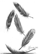 Calm Drawings - Feathers For A Friend by J Ferwerda