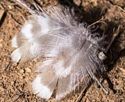 Steven Ralser - Feathers