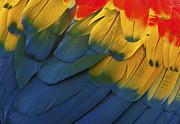 Feathery Details... Print by Nina Stavlund