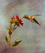 Colibri Paintings - Feeding Hummingbird by Angela A Stanton