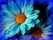 Blue Flowers Posters - Feeling Blue Poster by Karen Wiles