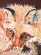Fox Pastels Prints - Feeling Foxy Print by Cori Solomon