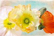 Angela Doelling AD DESIGN Photo and PhotoArt - Feeling of summer