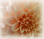 Feeling Peachy Print by Faye Giblin