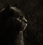 Feline Perfection Print by Laura Melis