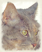 Cat Portraits Prints - Feline Portrait Print by David G Paul