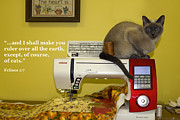 Tonkinese Posters - Felines Rule Poster by Sally Weigand