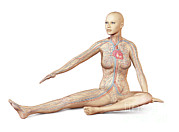 Human Body Parts Posters - Female Body Sitting In Dynamic Posture Poster by Leonello Calvetti
