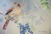 Bonnie Barry - Female Cardinal and Wild...