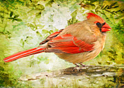 Debbie Portwood Prints - Female Cardinal  Card size Digital Paint Print by Debbie Portwood