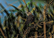 Weed Metal Prints - Female Grackle on the Dark Side Metal Print by Deborah Benoit