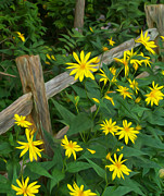 Split Rail Fence Digital Art - Fence and Flowers by Brian Mollenkopf