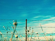 Jon Aley - Fence and Sky