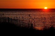 Beach Fence Digital Art Posters - Fence and the sun Poster by Michael Thomas