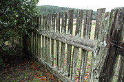 Graham Foulkes - Fence at the Farm