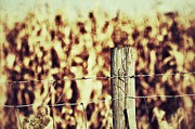 Cornfield Prints - Fence Print by Julia and David Bowman