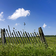 Tranquil-scene Prints - Fence in a pasture Print by Bernard Jaubert