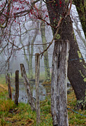 Douglas Stucky - Fence in Cades Cove