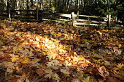 Graham Photo Originals - Fence in Fall by Graham Foulkes