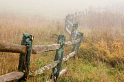 Lichen-covered Fence Prints - Fence in Fog Print by Rosemary Williams