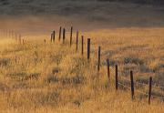 Border Prints - Fence In Pasture Near Cochrane Print by Darwin Wiggett