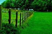Kamgeek Photography - Fence