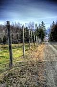 Armand  Roux - Northern Point Photography - Fence Line