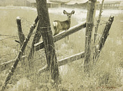 R christopher Vest - Fence Line Fawn