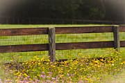 Heather Palmer - Fence-line flowers