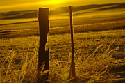 Cold Morning Sun Prints - Fence Post In The Morning Light Print by Jeff  Swan
