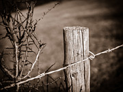Barbed Wire Fences Framed Prints - Fence Post Framed Print by Mark Llewellyn
