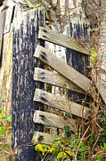 Old Fence Posts Posters - Fence Posts Poster by Jason Waugh