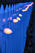 Fence Photo Prints - Fence with Christmas lights Print by Garry Gay