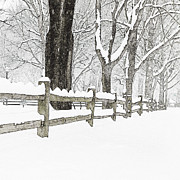 Split Rail Fence Photo Prints - Fenced In Forest Print by John Stephens