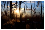 Grapevine Photo Originals - Fenced In Sunset by Michael Priest