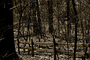 Frank J  Casella - Fenced Woods
