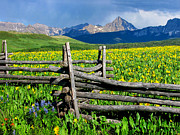 Split Rail Fence Framed Prints - Fenceline Flowers Framed Print by Rick Wicker