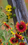 Blanket Prints - Fenceline Wildflowers Print by Robert Frederick