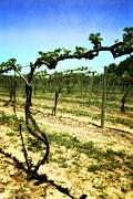 Michelle Calkins - Fenn Valley Vineyards