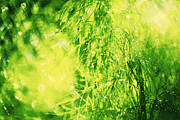 Fennel Abstract Print by Maria Bobrova