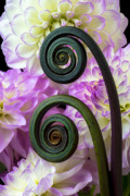 Fern Photos - Fern and dahlias by Garry Gay