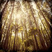 Tim Hester - Fern Forest Filtered