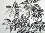Fern Drawings - Fern Ink Pointillism Study by Catherine Henningham Puttick
