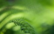 Jenny Rainbow - Fern Leaf 1. Healing Art