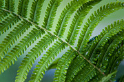 Fern Posters - Fern Leaf after Rain. Healing Art Poster by Jenny Rainbow