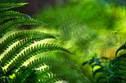 Jenny Rainbow - Fern Leaf. Healing Art