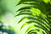 Jenny Rainbow - Fern Leaf Lit with Light. Healing Art