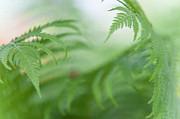 Jenny Rainbow - Fern Leaves Dance. healing Art